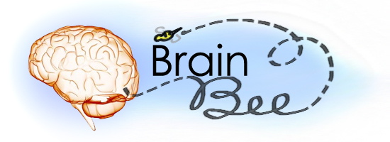 brain_bee